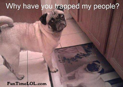 Why have you trapped my people?
