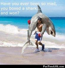 have you ever been so mad you boxed a shark and won?