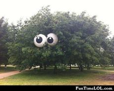 Eyeball tree