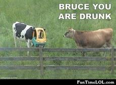 Bruce are you drunk?