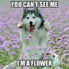 You can't see me.  I'm a flower