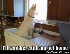 I'll wait here till you get home