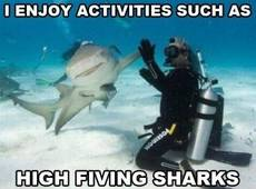 I enjoy activities such as high fiving sharks