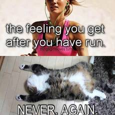 the feeling you get after you have run