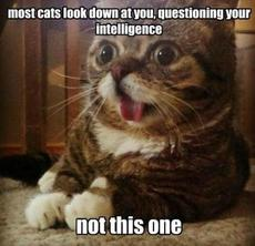most cats look down at you