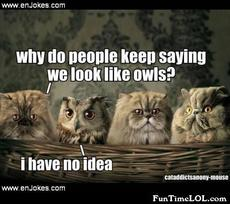 Why do people keep saying we look like owls?