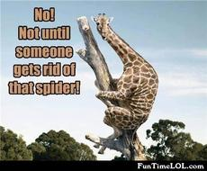not until someone gets rid of that spider!