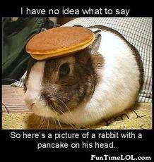 a rabbit with a pancake on his head